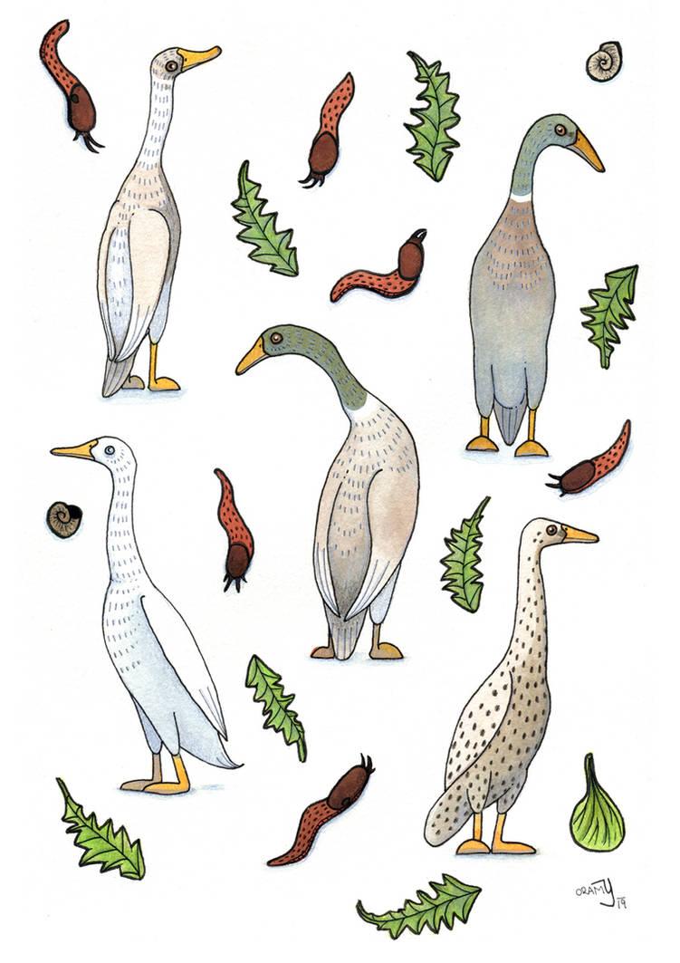 Ducks and slugs by yeyra