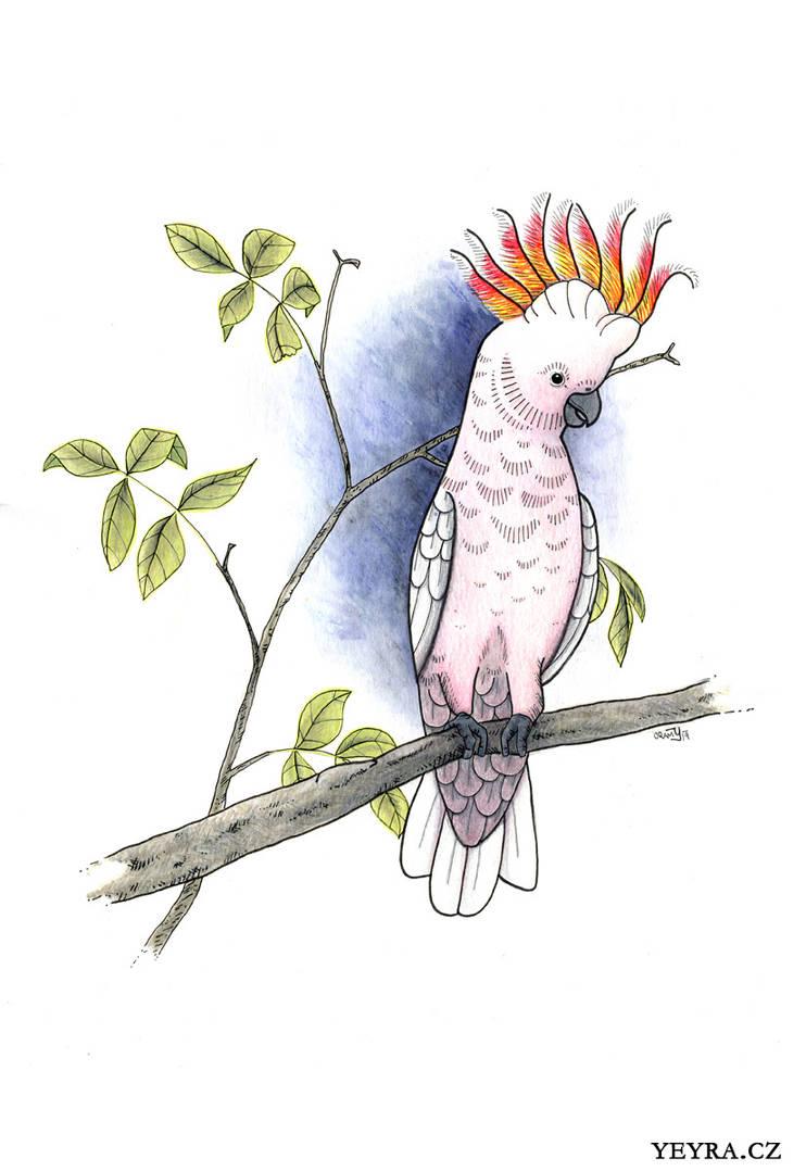 Major mitchell's cockatoo by yeyra