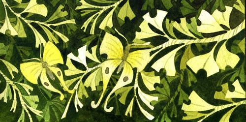 Ginkgo moth