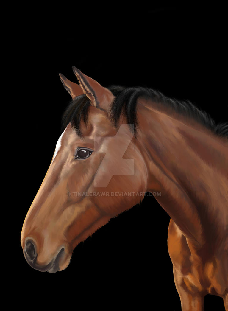 Winafter by TinaLeRawr