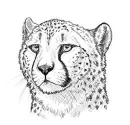 Cheetah by TinaLeRawr