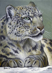Snow Queen - Snow Leopard by HOULY1970