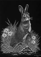 Rabbit by HOULY1970