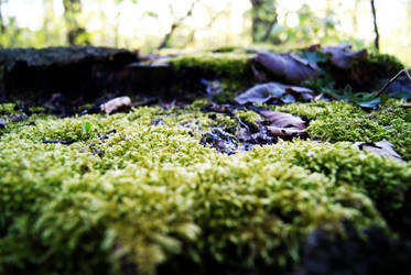 Moss by whythe60shateus