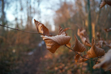 leaves by whythe60shateus