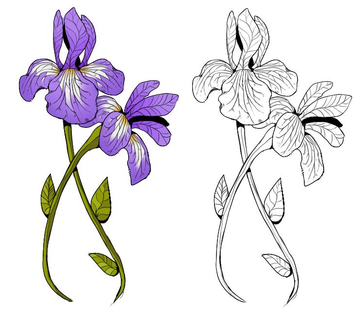 Iris Tattoo by NovaTrinity on DeviantArt