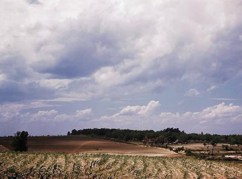 Corn field, Ga LOC 1941