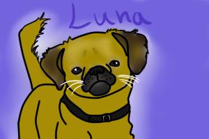 Luna, my aunts dog by Meme00