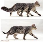 Cat Vs Treecat