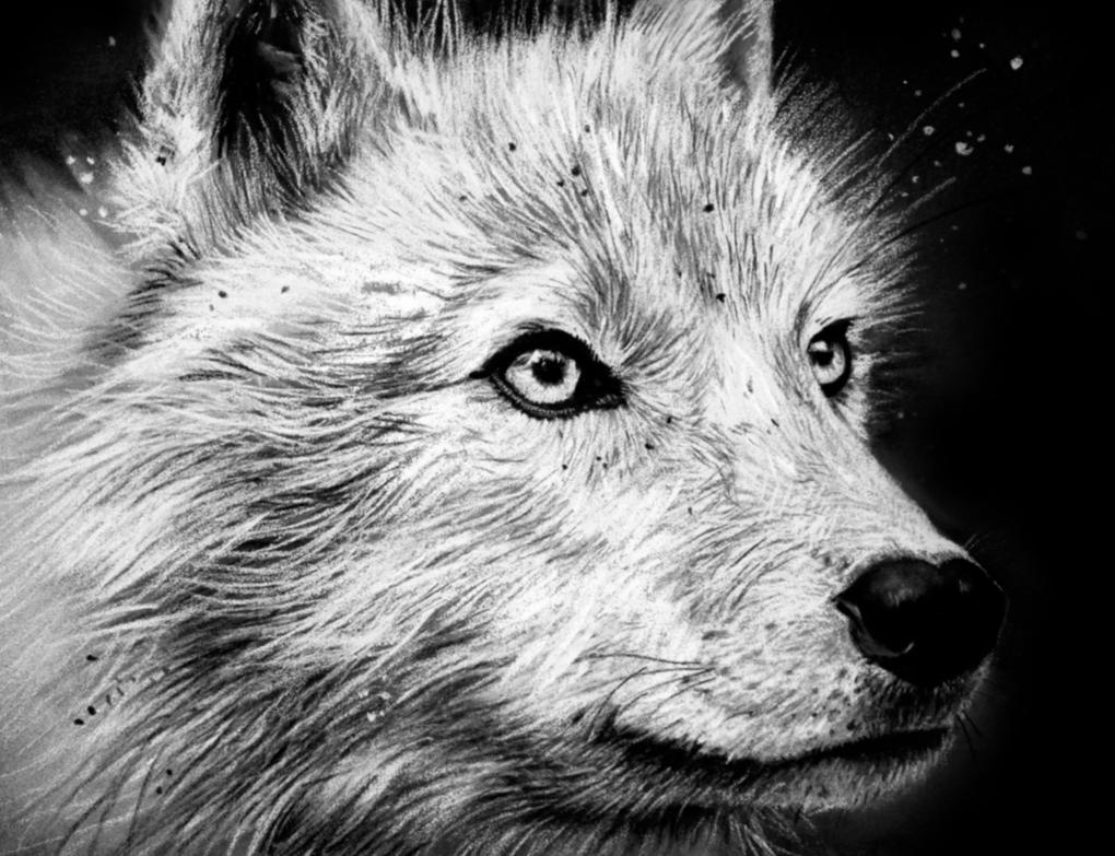 Arctic Wolf #1