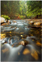 Gentle Stream by DrewHopper