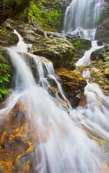 Tristania Cascades