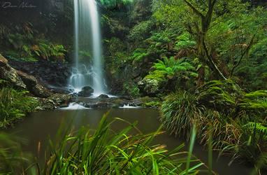 New England Rainforest by DrewHopper