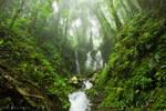 Deep Amongst The Jungle