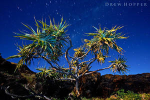 Beneath The Pandanus by DrewHopper