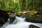 Curtis Falls Cascades