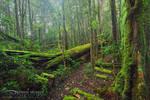 Sassafras Creek Track by DrewHopper