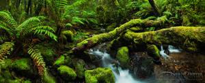 Enchanted Wilderness