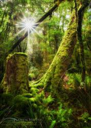 Magical Garden by DrewHopper