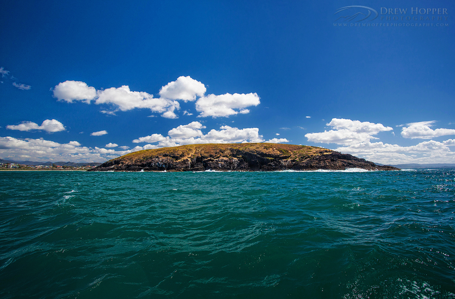 Muttonbird Island by Boat by DrewHopper