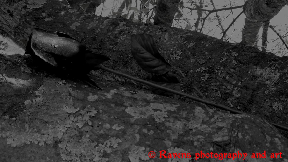 Dark rose. by GothicRavenMidnight