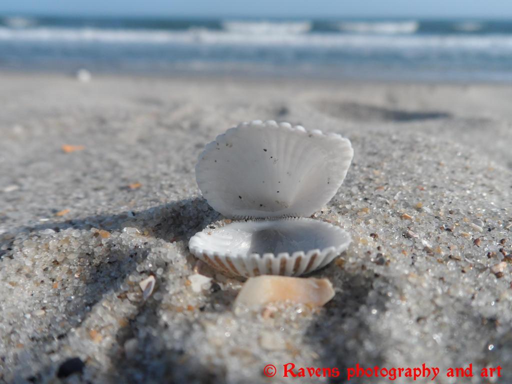 Seashell by GothicRavenMidnight
