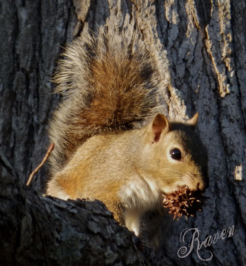 The Red Squirrel by GothicRavenMidnight