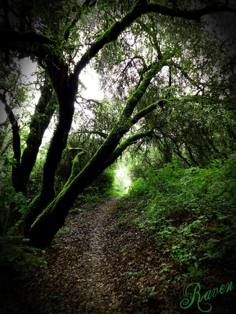 The Elder Tree by GothicRavenMidnight