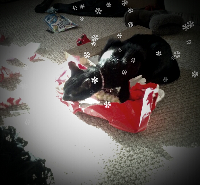 Shadow opening gifts by GothicRavenMidnight