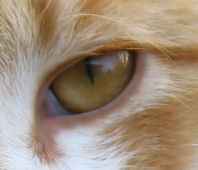 Cat's Eye by OneofakindKnight