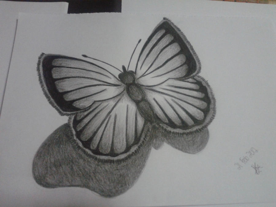 Pencil Butterfly By Kokkilamb01 On DeviantArt