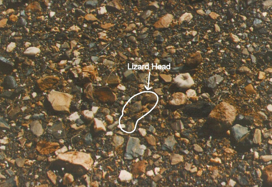Is that a lizard on Mars – why is NASA silent?, page 1