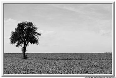 Lonely Tree by DarkestFear