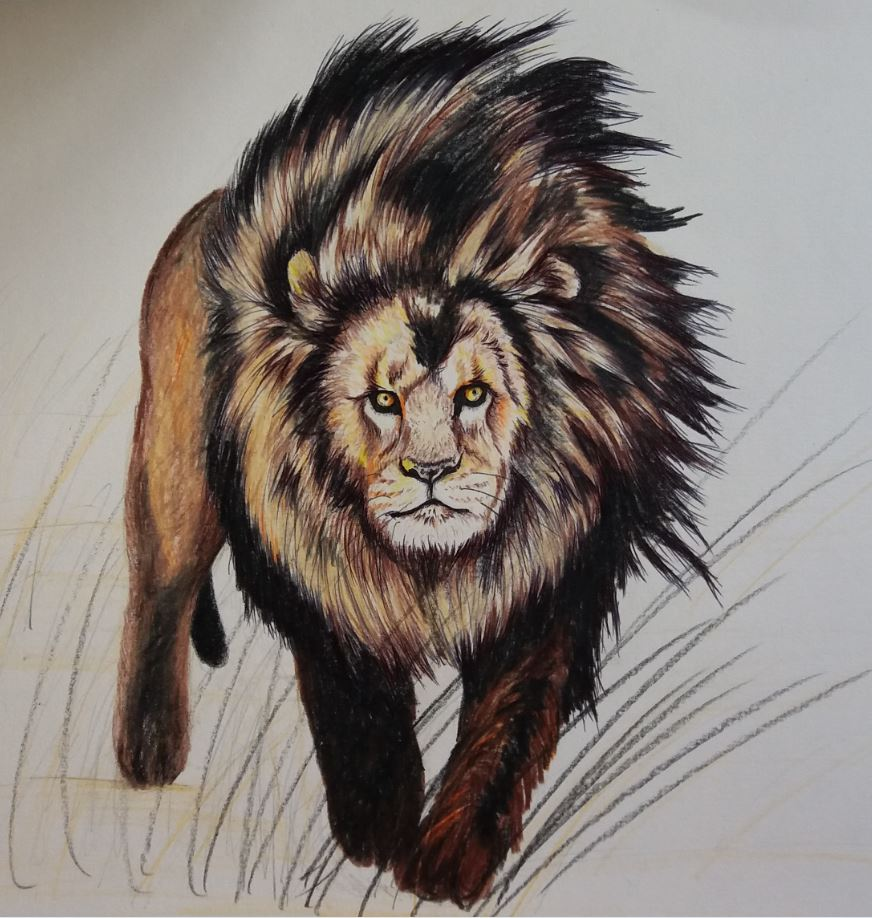 LION by Jai-artes