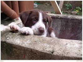 Hudson the Puppy by MellyTheNinja