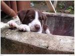 Hudson the Puppy