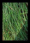 :: grass ::