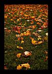 :: leaves II ::