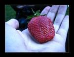 :: summer's first strawberry :