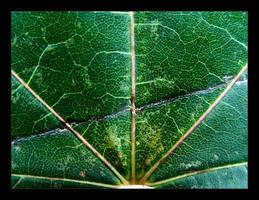 :: fall leaf I :: by synergia