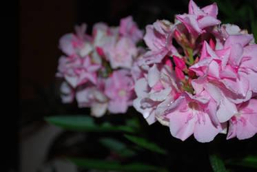 Light Bloom by joeshen