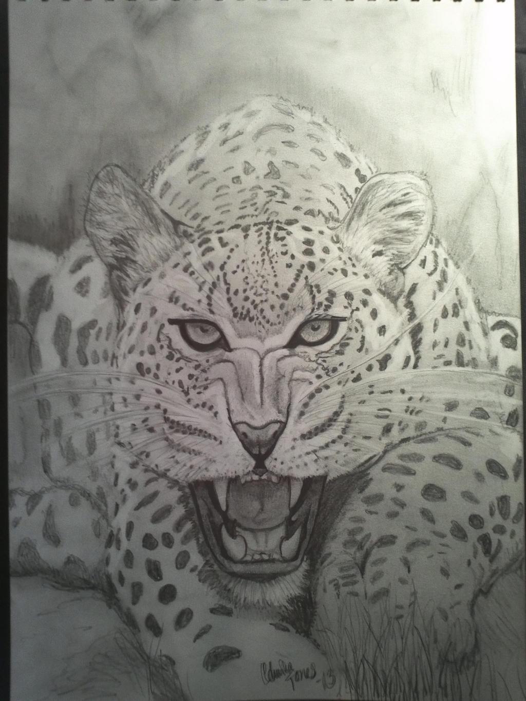 leopard by tonez2