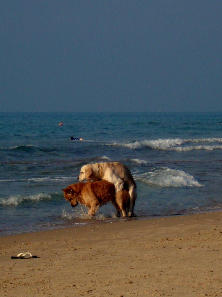 Sex on the beach photos