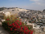 Mt.of Olives and Sillowan