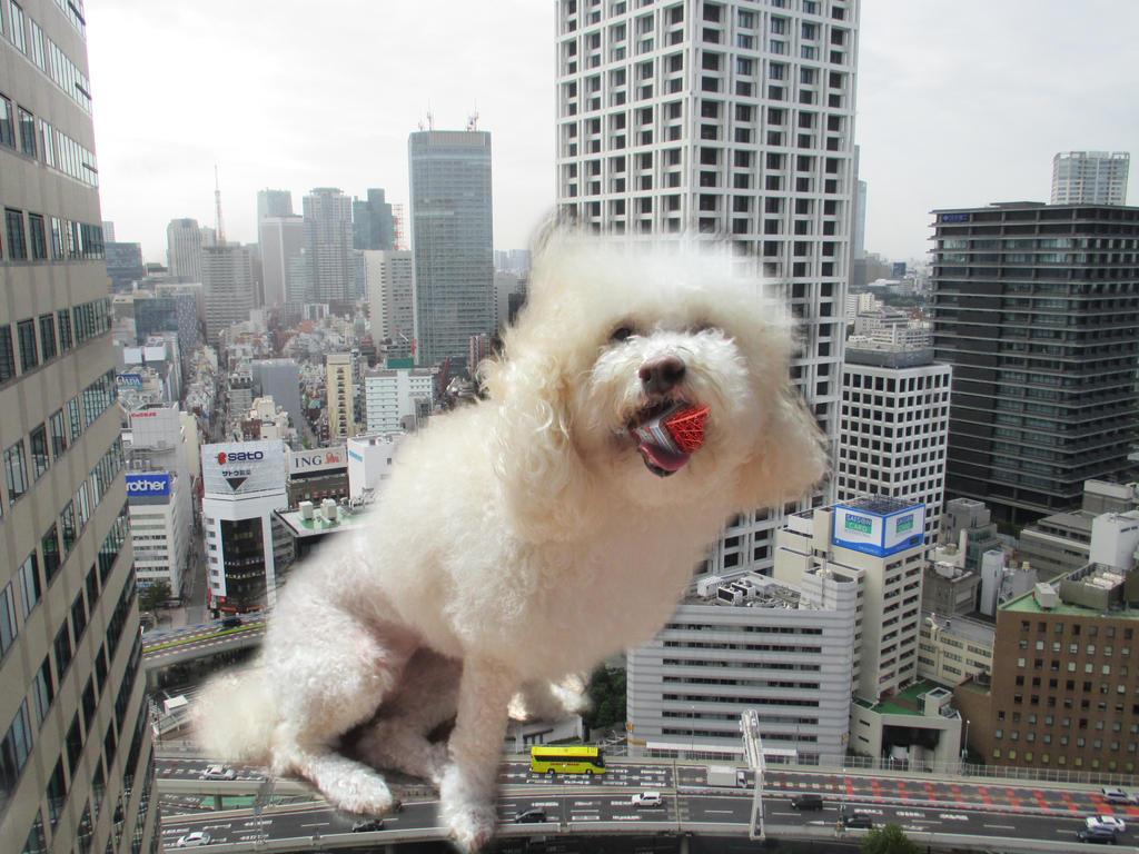 Tokyo Dog by TheWiseOldMonkey