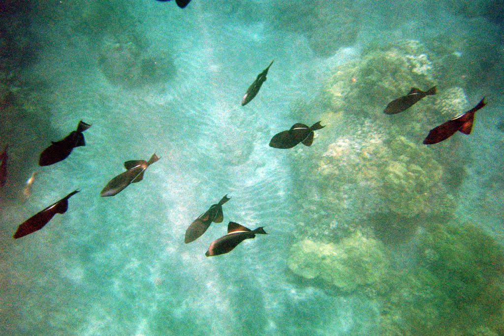 Trigger Fish by TheWiseOldMonkey