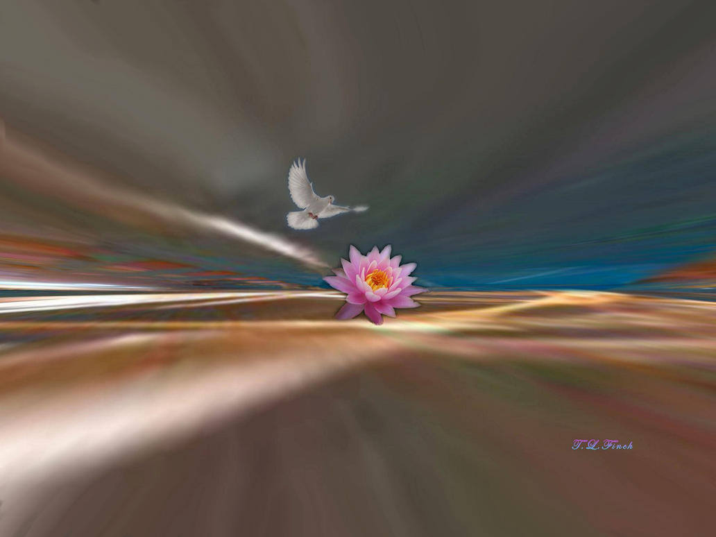 White Winged Dove and Water Lilly by TLFinch