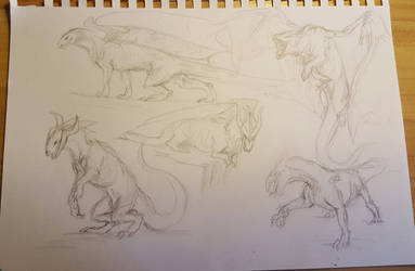 Dragon Sketches by Tibbles4684