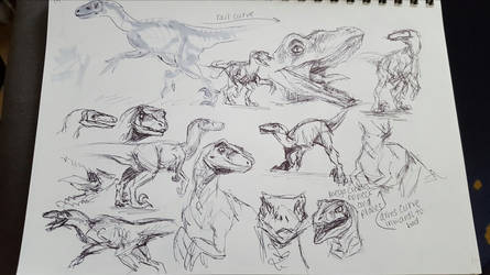 Raptor Sketches by Tibbles4684