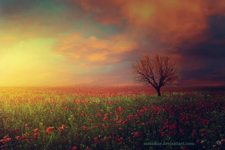 A lonesome tree by msRainie